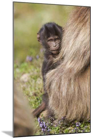 Africa, Ethiopia, Ethiopian Highlands, Western Amhara, Simien Mountains National Park-Ellen Goff-Mounted Photographic Print