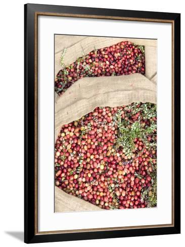 Massachusetts, Wareham, Cranberries-Jim Engelbrecht-Framed Art Print