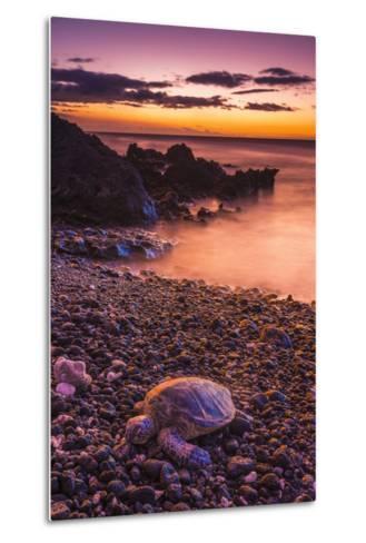 Hawaiian Green Sea Turtle on a Lava Beach at Sunset, Kohala Coast, the Big Island, Hawaii-Russ Bishop-Metal Print