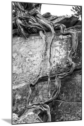Utah. Black and White Image of Desert Juniper Tree Growing Out of a Canyon Wall-Judith Zimmerman-Mounted Photographic Print