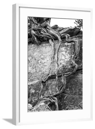 Utah. Black and White Image of Desert Juniper Tree Growing Out of a Canyon Wall-Judith Zimmerman-Framed Art Print
