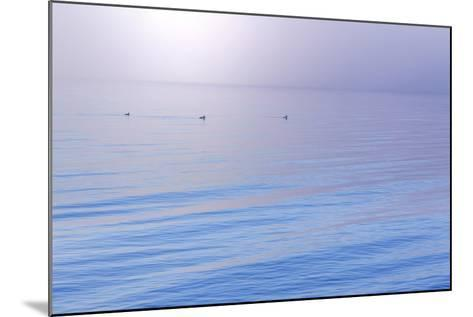 Washington State, Seabeck. Foggy Sunrise over Hood Canal-Jaynes Gallery-Mounted Photographic Print