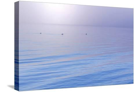 Washington State, Seabeck. Foggy Sunrise over Hood Canal-Jaynes Gallery-Stretched Canvas Print