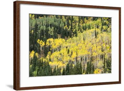 Aspen Trees in the Fall-Howie Garber-Framed Art Print