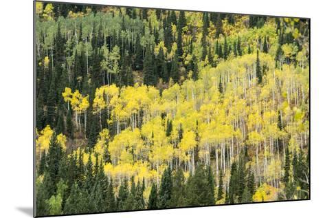 Aspen Trees in the Fall-Howie Garber-Mounted Photographic Print