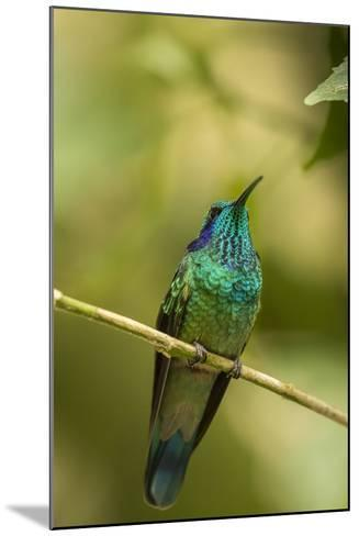 Central America, Costa Rica, Monteverde Cloud Forest Biological Reserve-Jaynes Gallery-Mounted Photographic Print