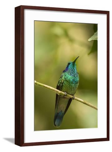 Central America, Costa Rica, Monteverde Cloud Forest Biological Reserve-Jaynes Gallery-Framed Art Print