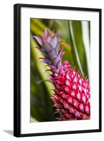 Hawaii, Maui, Pineapple Bromeliad Growing in the Maui-Terry Eggers-Framed Art Print