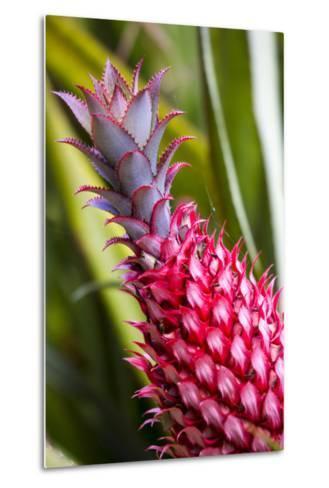 Hawaii, Maui, Pineapple Bromeliad Growing in the Maui-Terry Eggers-Metal Print