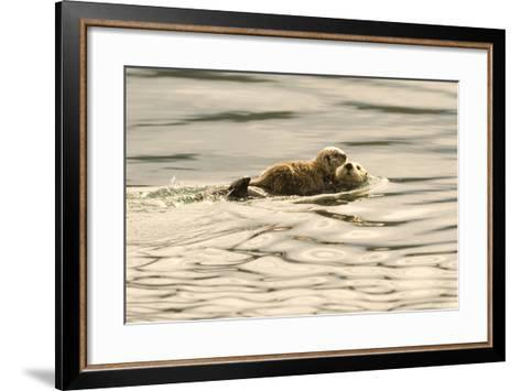 A Mother Sea Otter Swims on Her Back as Her Baby Rests on Her Stomach in Alaskan Waters-John Alves-Framed Art Print