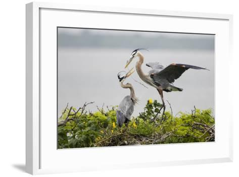 Great Blue Heron-Larry Ditto-Framed Art Print