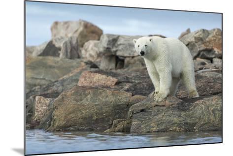 Polar Bear Standing at Water's Edge Along Hudson Bay Near Arctic Circle,Canada-Paul Souders-Mounted Photographic Print