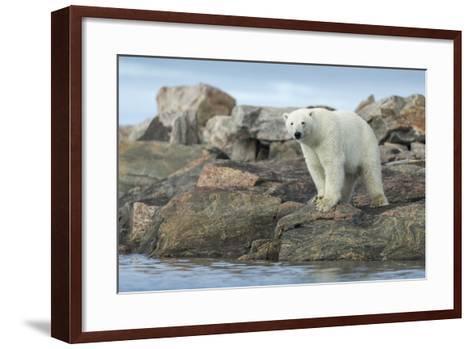 Polar Bear Standing at Water's Edge Along Hudson Bay Near Arctic Circle,Canada-Paul Souders-Framed Art Print
