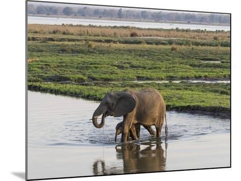 Africa, Zambia. Mother and Young in River-Jaynes Gallery-Mounted Photographic Print