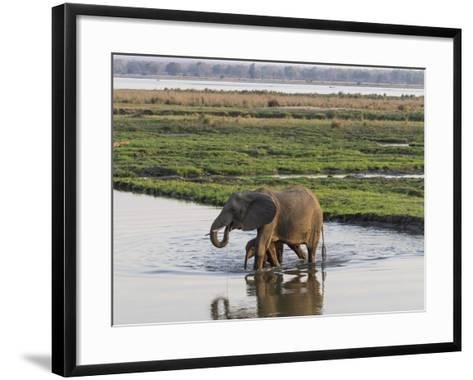 Africa, Zambia. Mother and Young in River-Jaynes Gallery-Framed Art Print