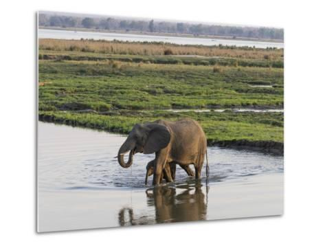 Africa, Zambia. Mother and Young in River-Jaynes Gallery-Metal Print