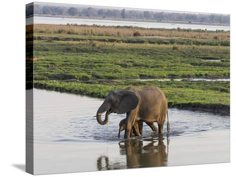 Africa, Zambia. Mother and Young in River-Jaynes Gallery-Stretched Canvas Print