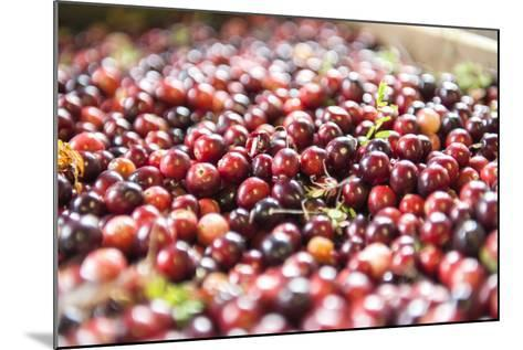 Massachusetts, Wareham, Cranberries-Lisa S^ Engelbrecht-Mounted Photographic Print