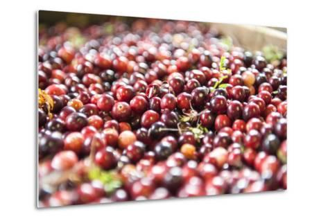 Massachusetts, Wareham, Cranberries-Lisa S^ Engelbrecht-Metal Print