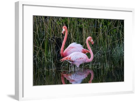 Ecuador, Galapagos Islands, Isabela, Punta Moreno-Ellen Goff-Framed Art Print