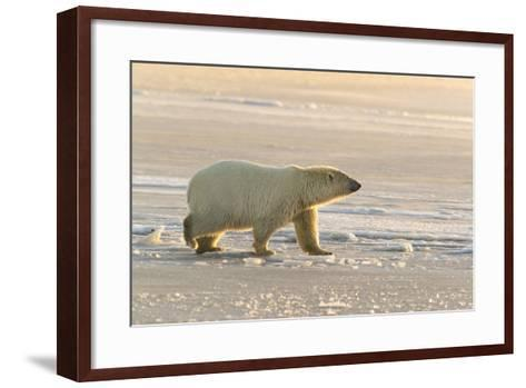 Polar Bears Near Kaktovic, Alaska-Howie Garber-Framed Art Print