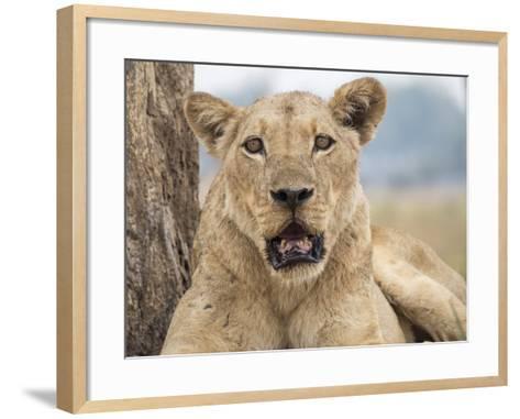 Africa, Zambia. Portrait of Lioness-Jaynes Gallery-Framed Art Print