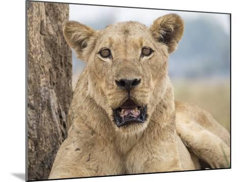 Africa, Zambia. Portrait of Lioness-Jaynes Gallery-Mounted Photographic Print
