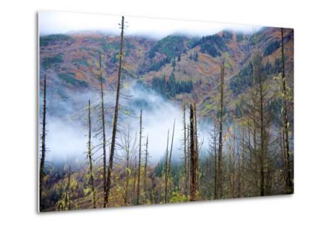 The Stewart Cassiar Highway Provides Access to Central Northern Park, B.C, an Area Rich in Wildlife-Richard Wright-Metal Print