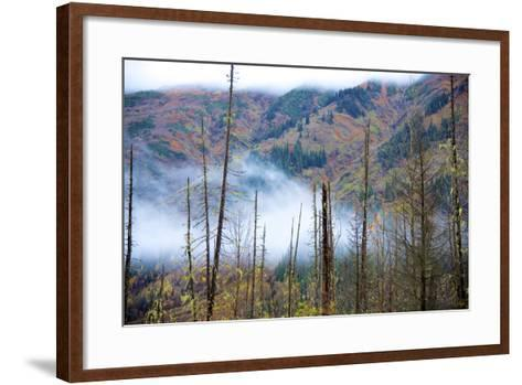 The Stewart Cassiar Highway Provides Access to Central Northern Park, B.C, an Area Rich in Wildlife-Richard Wright-Framed Art Print