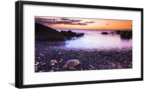 Hawaiian Green Sea Turtles on a Lava Beach at Sunset, Kohala Coast, the Big Island, Hawaii-Russ Bishop-Framed Art Print