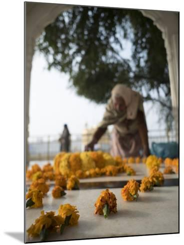 Religious Flower Offerings, at Golden Temple in Amritsar, Punjab, India-David H^ Wells-Mounted Photographic Print