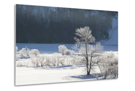 Canada, Nova Scotia, Cape Breton, Cabot Trail, Frosted Trees in Margaree-Patrick J^ Wall-Metal Print