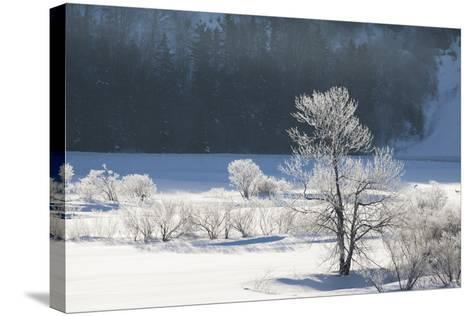 Canada, Nova Scotia, Cape Breton, Cabot Trail, Frosted Trees in Margaree-Patrick J^ Wall-Stretched Canvas Print
