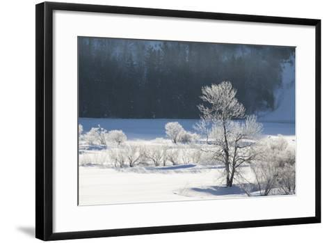 Canada, Nova Scotia, Cape Breton, Cabot Trail, Frosted Trees in Margaree-Patrick J^ Wall-Framed Art Print