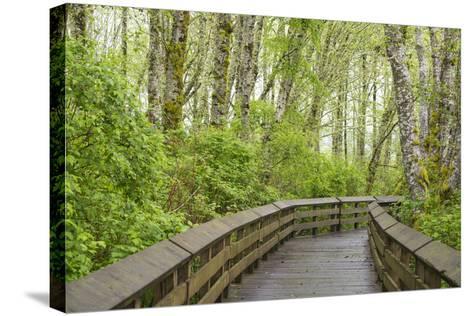 Washington State, Sandpiper Trail Boardwalk in Alder Tree Grove-Trish Drury-Stretched Canvas Print