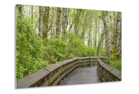 Washington State, Sandpiper Trail Boardwalk in Alder Tree Grove-Trish Drury-Metal Print