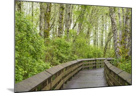 Washington State, Sandpiper Trail Boardwalk in Alder Tree Grove-Trish Drury-Mounted Photographic Print
