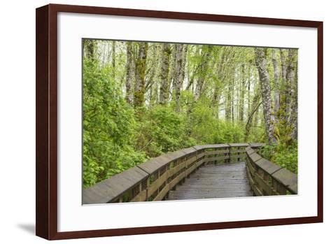 Washington State, Sandpiper Trail Boardwalk in Alder Tree Grove-Trish Drury-Framed Art Print