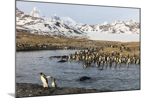 St. Andrew's Bay, South Georgia Island. King Penguins Cross a Stream-Jaynes Gallery-Mounted Photographic Print
