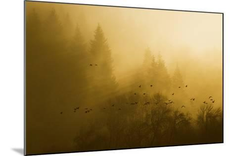 Canada Geese, Foggy Morning Flight-Ken Archer-Mounted Photographic Print