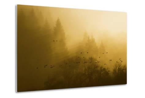 Canada Geese, Foggy Morning Flight-Ken Archer-Metal Print