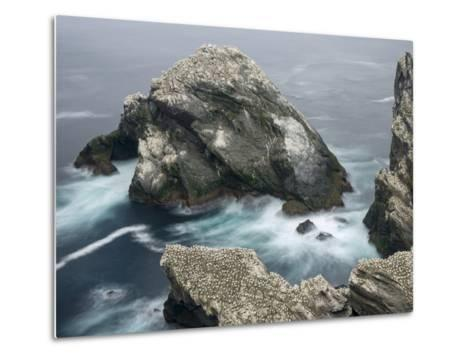 Hermaness National Nature Reserve on Island Unst. Hermaness Reserve with Colony of Northern Gannet-Martin Zwick-Metal Print