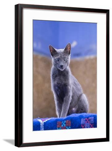 Morocco, Chefchaouen. a Female Cat Looks on in Curiosity-Brenda Tharp-Framed Art Print