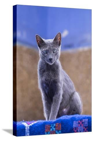 Morocco, Chefchaouen. a Female Cat Looks on in Curiosity-Brenda Tharp-Stretched Canvas Print