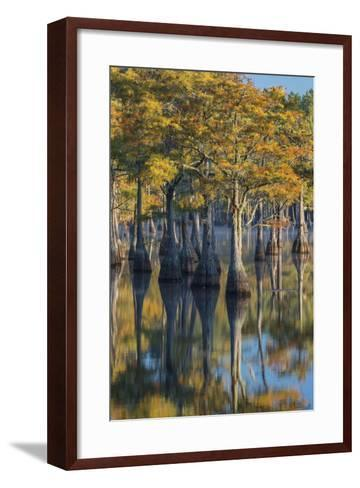 Georgia, George L. Smith State Park, Pond Cyprus in Early Morning Light-Judith Zimmerman-Framed Art Print