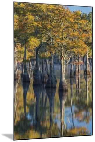 Georgia, George L. Smith State Park, Pond Cyprus in Early Morning Light-Judith Zimmerman-Mounted Photographic Print