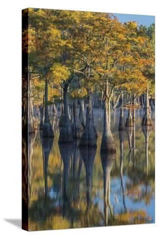 Georgia, George L. Smith State Park, Pond Cyprus in Early Morning Light-Judith Zimmerman-Stretched Canvas Print