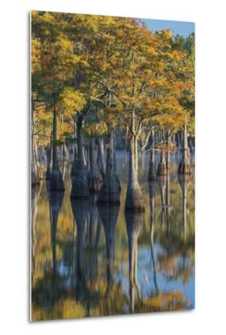 Georgia, George L. Smith State Park, Pond Cyprus in Early Morning Light-Judith Zimmerman-Metal Print