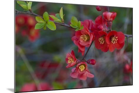 Red Flowers on a Branch-Anna Miller-Mounted Photographic Print