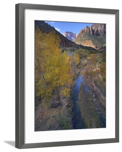 Sunset at West Temple and Pine Creek, Zion National Park, Utah-Tim Fitzharris-Framed Art Print